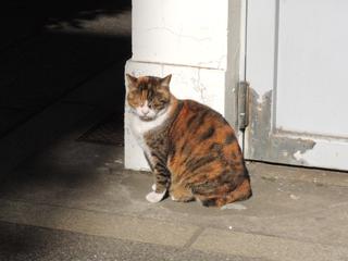 椙森神社の猫
