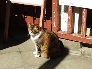 椙森神社のネコ