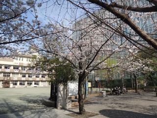 蛎殻町公園の桜