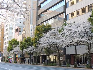 水天宮前の桜並木